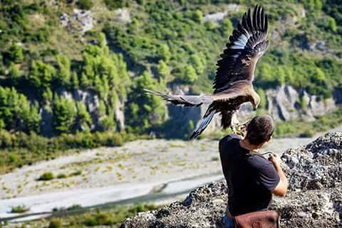 In the eagles's wild life